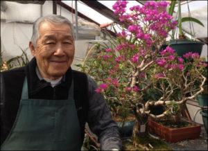 Hal Sasaki - Bonsai Master
